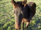 Konji ispod Potočana